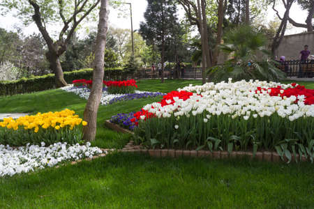Multicolored tulips bloomed in spring in Istanbul, Turkey. Entire fields of tulips.