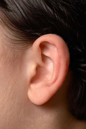 auditory: Kids ear. Close up of anatomy of human ear.
