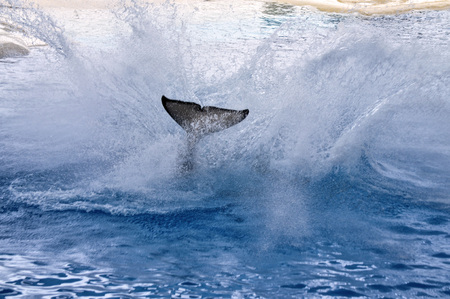 Splashing whale will move to the tail.