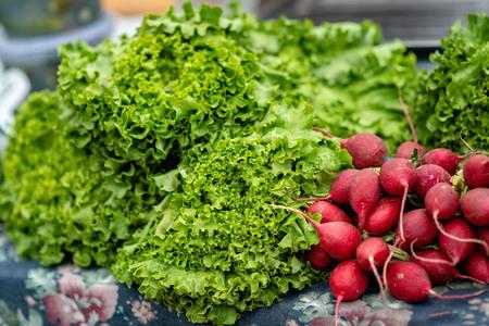 Radish and fresh salad leaves. Close-up photograph.