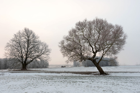 Cold winter morning landscape with a road and lonely tree. Stock Photo