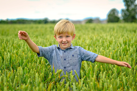 A small, blond boy in the field of cereals. 版權商用圖片