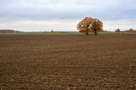Lone trees in the middle of a cultivated field on a cloudy autumn morning.