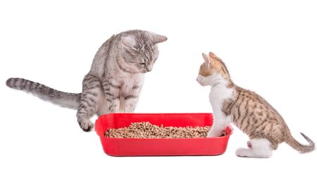 two funny cats playing in a cat toilet, isolated with clipping path