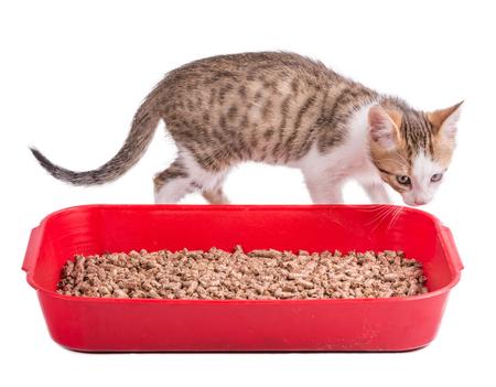 클리핑 패스와 함께 절연 고양이 화장실에서 놀고 두 재미 있은 고양이
