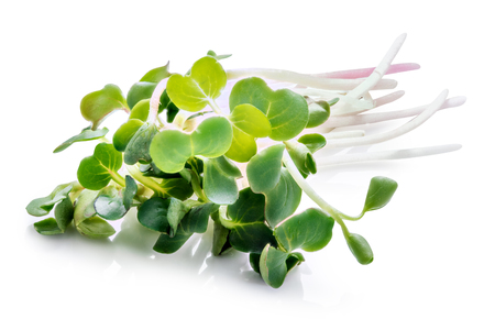 Young sprout microgreen isolated with shadow on white background. Clipping path. 스톡 콘텐츠