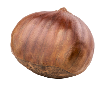 Chestnut isolated on white background. Clipping path