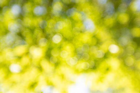 Sfondo primaverile, foglie verdi su sfondo sfocato