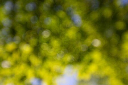 Fond de printemps, feuilles vertes sur fond flou