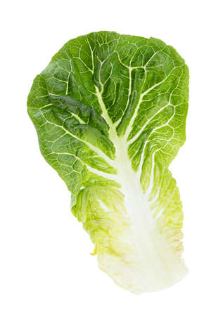 Green lettuce cabbage isolated on white background.