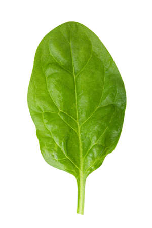Green fresh spinach isolated on white background.