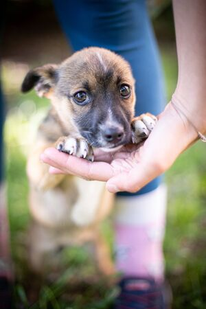 Puppy with spring foliage bokeh and sunset light