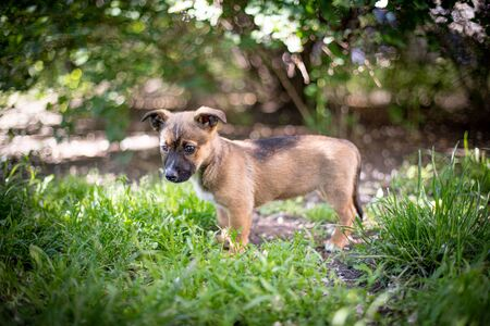 Puppy with spring foliage bokeh and sunset light Imagens