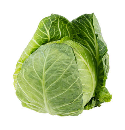 Fresh cabbage isolated on white background. Clipping path