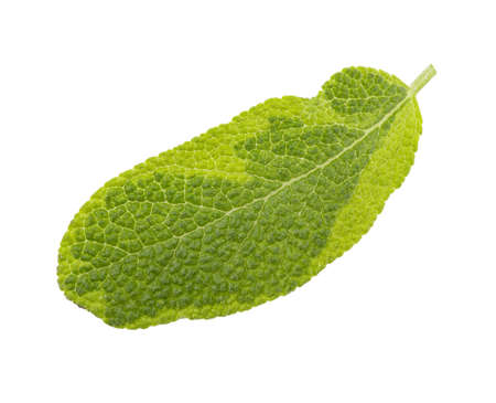 Fresh herb isolated on white background. Clipping path