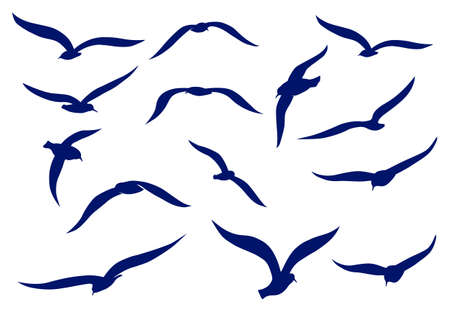 sea gull: Seagull silhouettes Illustration