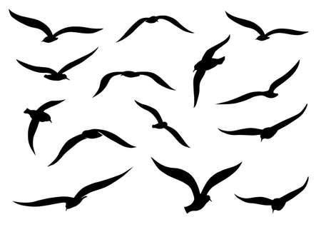 paz: Silhuetas negras gaivota