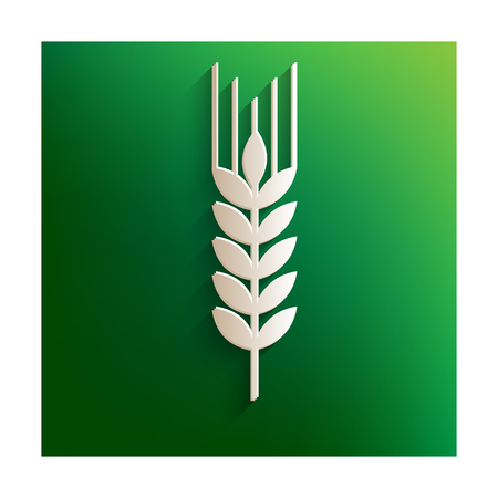 green wheat: Wheat vector icon. Paper effect on green background