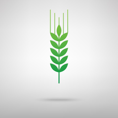 green wheat: Wheat sign. Green icon with shadow on the grey backgroud