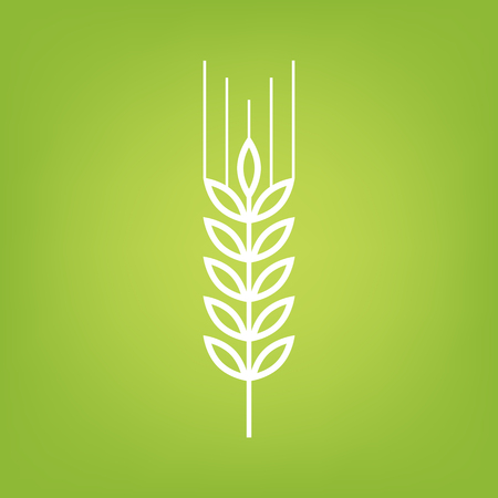 green wheat: Wheat line icon on green background. Vector illustration