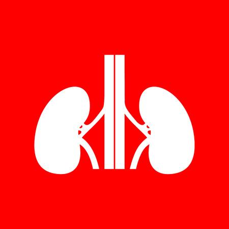 kidneys: Human kidneys sign. White icon on red background. Illustration