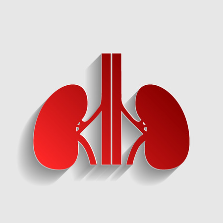 ureter: Human kidneys sign. Red paper style icon with shadow on gray. Illustration