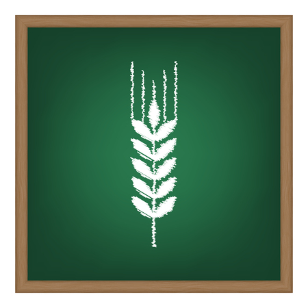 green wheat: Wheat sign illustration. White chalk effect on green school board. Illustration