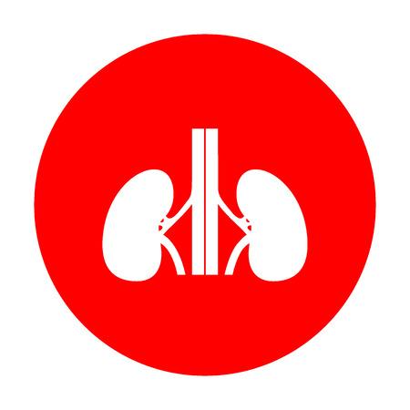 kidneys: Human kidneys sign. White icon on red circle.