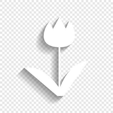 Tulip sign. Vector. White icon with soft shadow on transparent background. Illustration