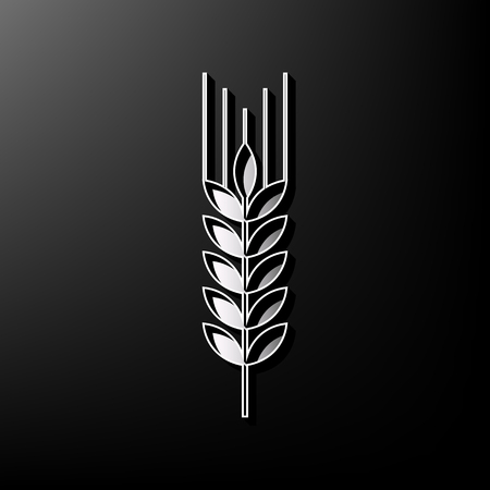 spica: Wheat sign illustration. Spike. Spica. Vector. Gray 3d printed icon on black background. Illustration