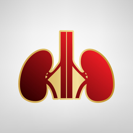 Human anatomy. Kidneys sign. Vector. Red icon on gold sticker at light gray background. Vectores