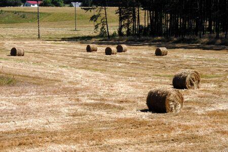 greengrass: Hay field in summer somewhere in Polish village