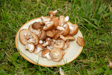 Mushrooms on the plate on background of green grass Banco de Imagens