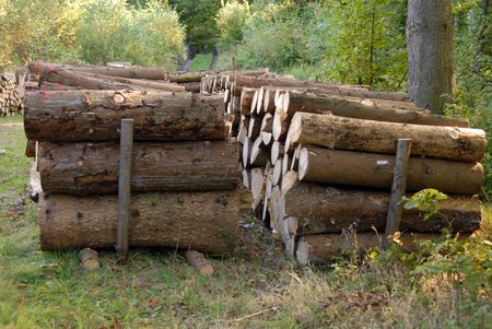 A lot of pile of Wood in autumn forest photo