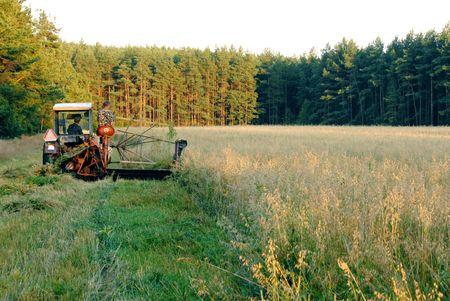 operates: Un uomo gestisce un vecchio trattore, il taglio del fieno in un campo