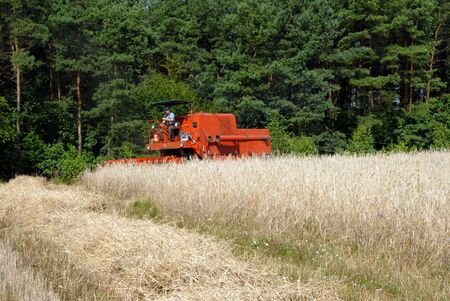 red combine harvester harvesting a grain field photo