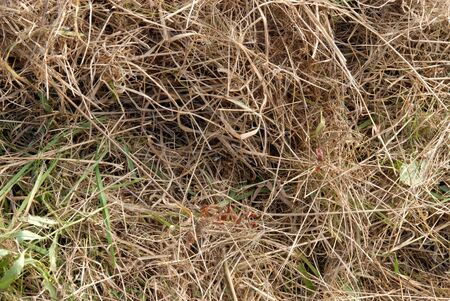 Close up of brown dry grass in a summer drought photo