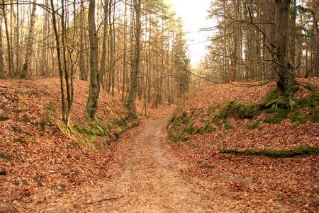 earth road: Earth strada nella foresta da qualche parte in Polonia