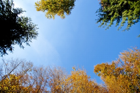 Blue sky surrounded by trees Stock Photo - 12600833