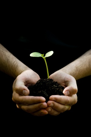 black seeds: A male hands hold a young plant, seedling