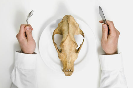 famine: Famine concept. Man eat animal skull with fork and knife.  Stock Photo