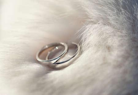 Two wedding rings on white fur  Stock Photo
