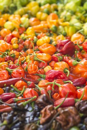 hottest: a colorful mix of the hottest chili peppers. Thai chili, habanero, serrano, jalapeno, bhut jolokia, trinidad scorpion, carolina reaper, jamaican yellow, black chili Stock Photo