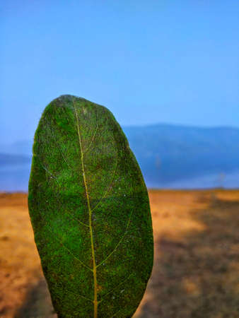 Green Textured leaf with a river and mountains at background and blue sky.