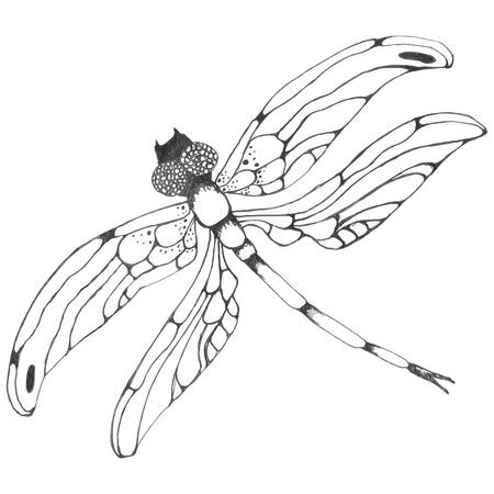 Dragonflie. dibujado a mano precioso gráfico en escala de grises