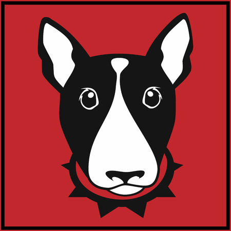 pit: Cute bull terrier with dog collar on red background Stock Photo