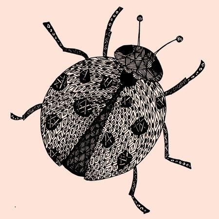 Lady-bird or ladybug isolated on light background . Hand-drawn doodle sketch illustration. . Stock Photo