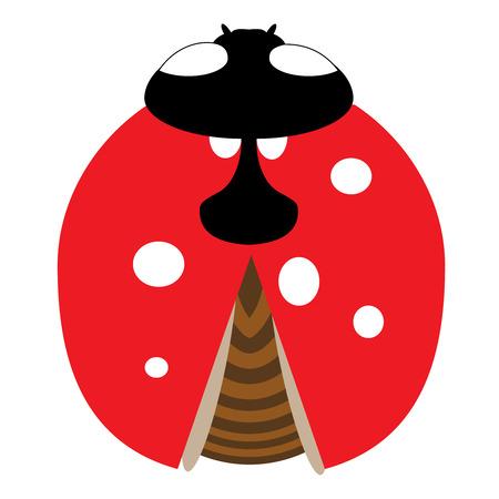 Lady-bird or ladybug isolated on light white background. Red insect