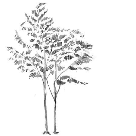 Hand drawn black tree without leaves on white background. Branches of small rowan, wild ash plant  illustration. Simple gray sketch.