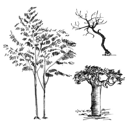 Hand drawn black set of trees without leaves isolated on white background. Branches of small baobab, sorb, wild ash plants in vector illustration. Simple gray sketch.